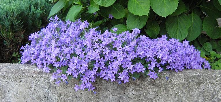 Fleurs de saison - Page 2 12910