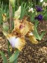 2020 - Iris ! - Page 11 1234ad10