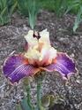 2020 - Iris ! - Page 12 58082410