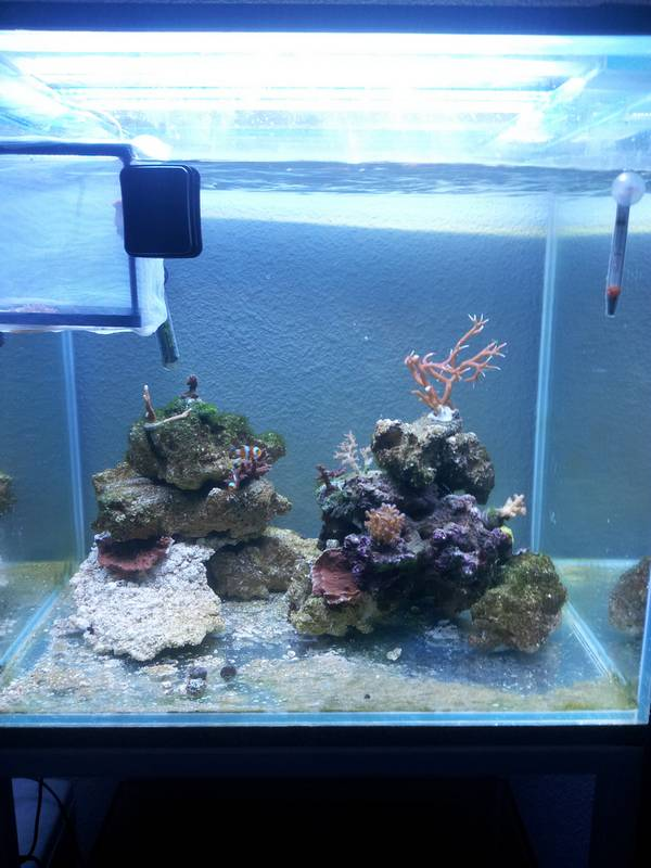 new reef 20130117