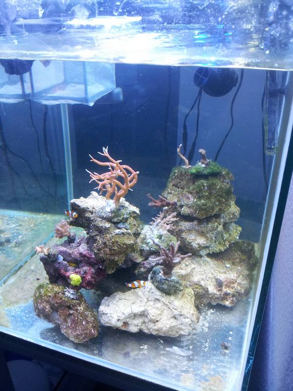 new reef 20130118
