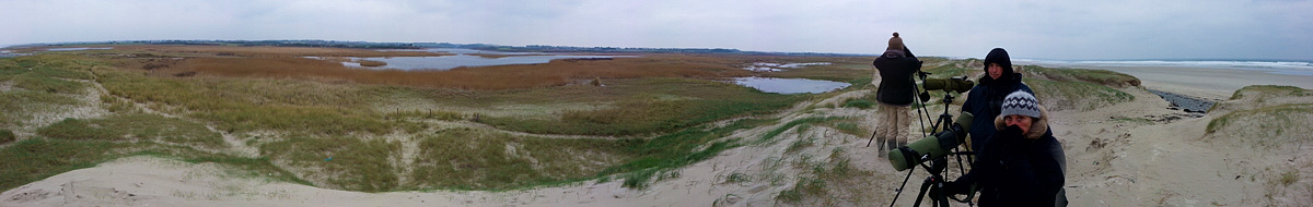 "Comptage oiseaux d'eau hivernants ""Wetlands"" en Baie d'Audierne Wetlan11"