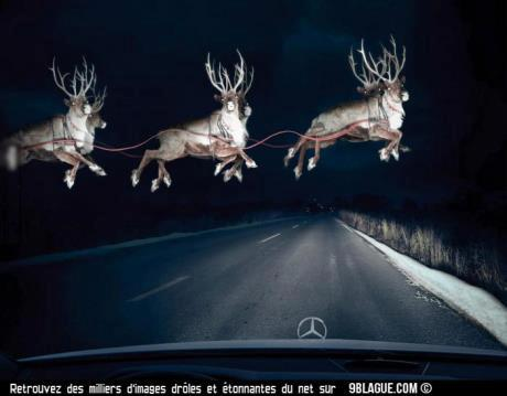 J'ai vu les rennes du père noel en étant en voiture sur la route 37533310