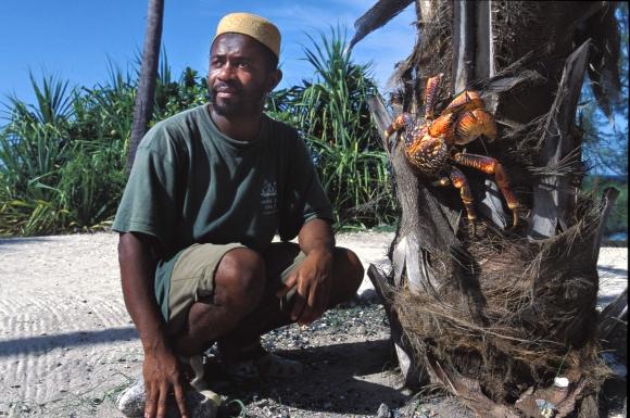 Crabe géant des cocotiers, assez impressionnant. - Page 2 Img-1-10