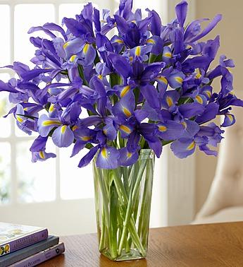 Une fleur...nommée Iris.... Iris10
