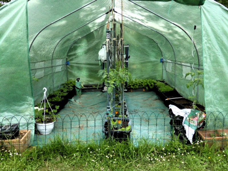 Mon jardin potager P1010317