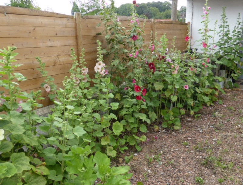 Mon jardin potager - Page 2 P1010410