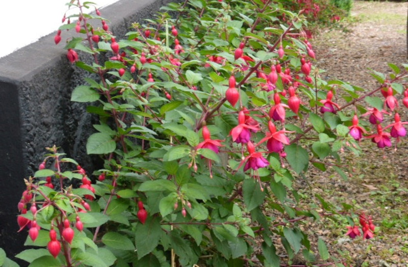 Mon jardin potager - Page 2 P1010413