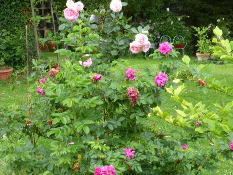 Mon jardin potager - Page 2 P1010416
