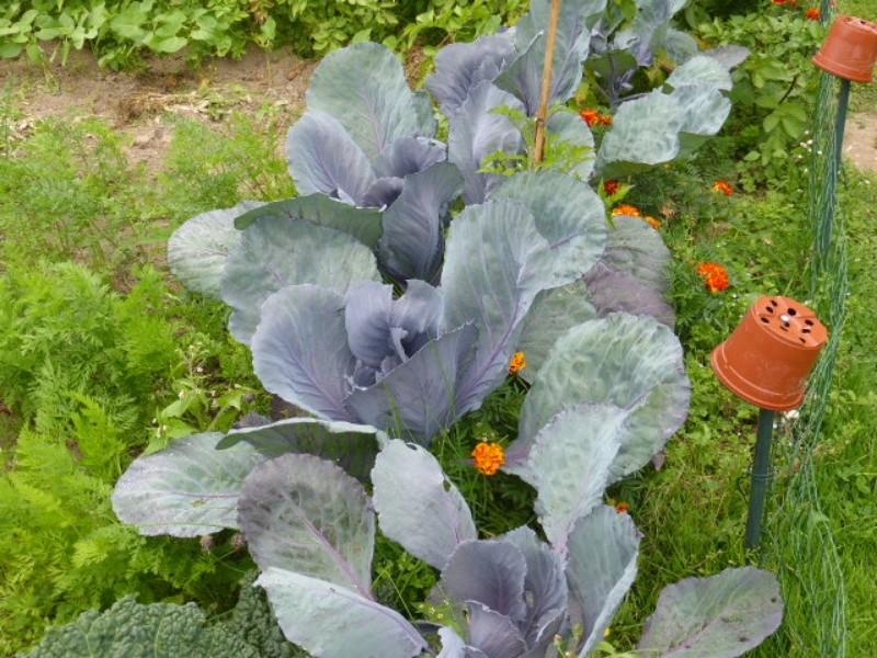 Mon jardin potager - Page 2 P1010421