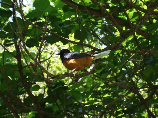 Sur un arbre perché Waimea10