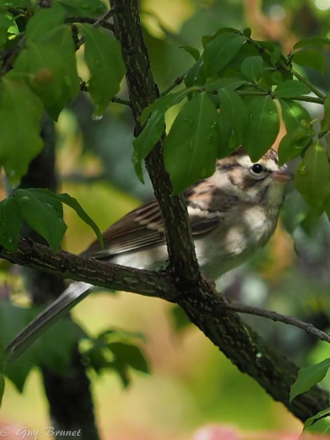 Plusieurs oiseaux à identifier P9090417
