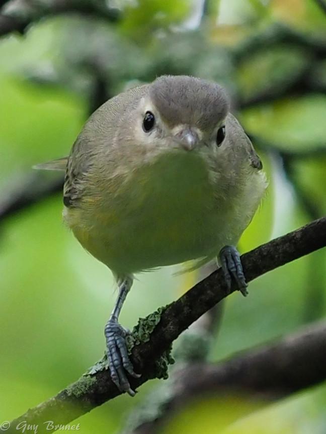 Plusieurs oiseaux à identifier P9090418