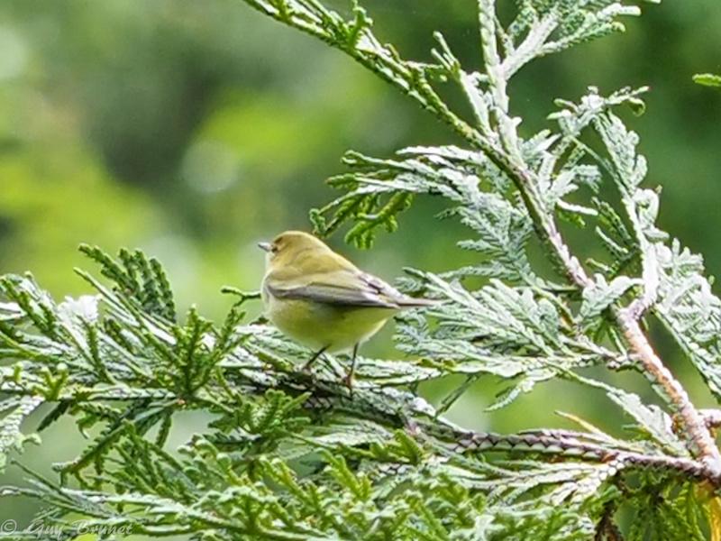 Plusieurs oiseaux à identifier P9090419