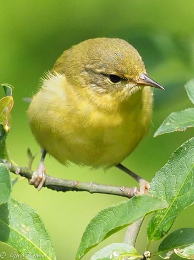 Plusieurs oiseaux à identifier P9090531