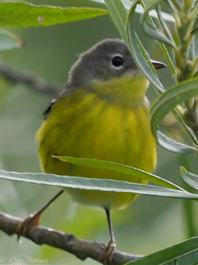 Plusieurs oiseaux à identifier P9090532