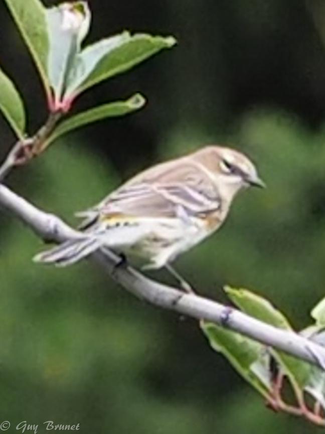 Plusieurs oiseaux à identifier P9090533