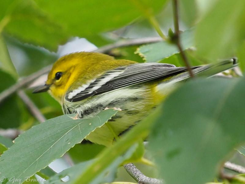 Plusieurs oiseaux à identifier P9090534