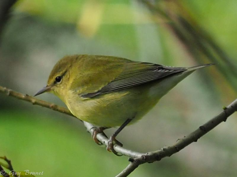 Plusieurs oiseaux à identifier P9090535