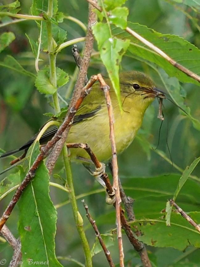 Plusieurs oiseaux à identifier P9090537