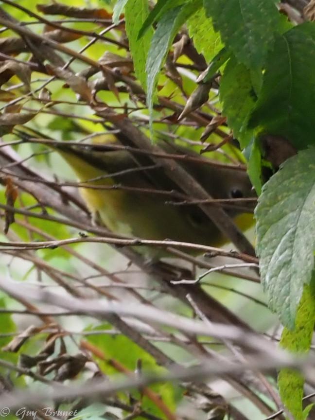 Encore d'autres oiseaux à identifier s.v.p. P9100610