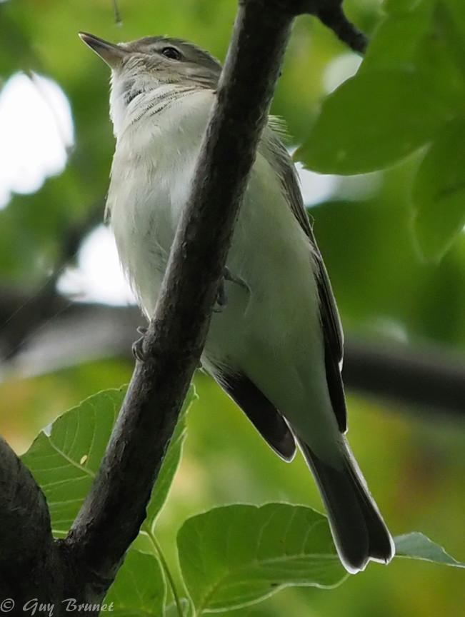 Encore d'autres oiseaux à identifier s.v.p. P9100712