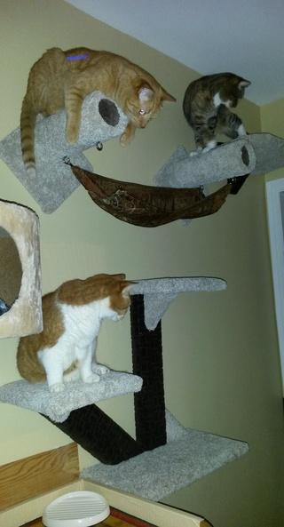 Chat et chien et petit logis Quietu10