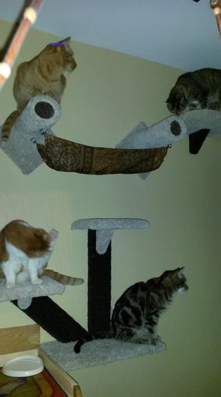 Chat et chien et petit logis Tourde10