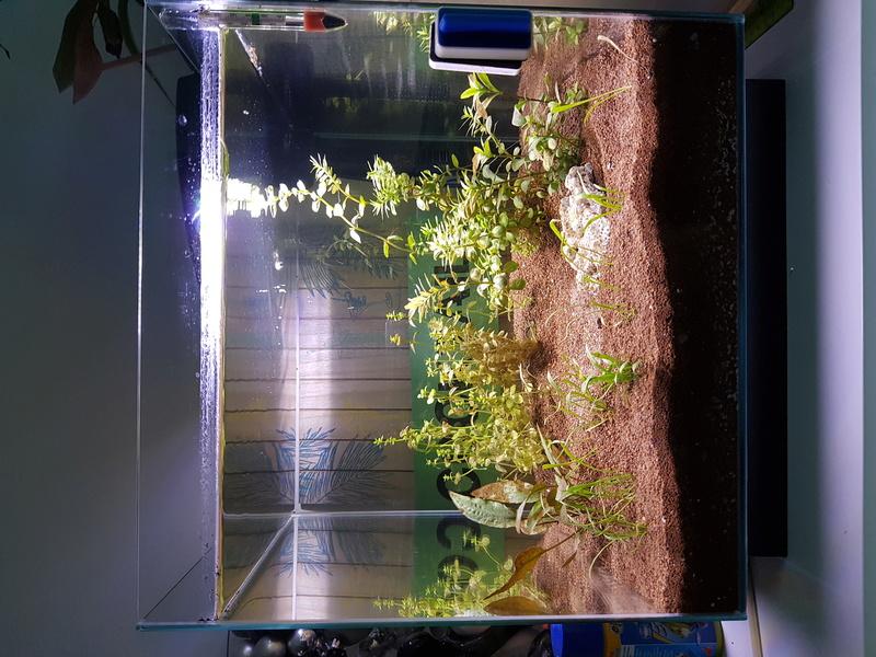 Sauver mes plantes ? 20170912