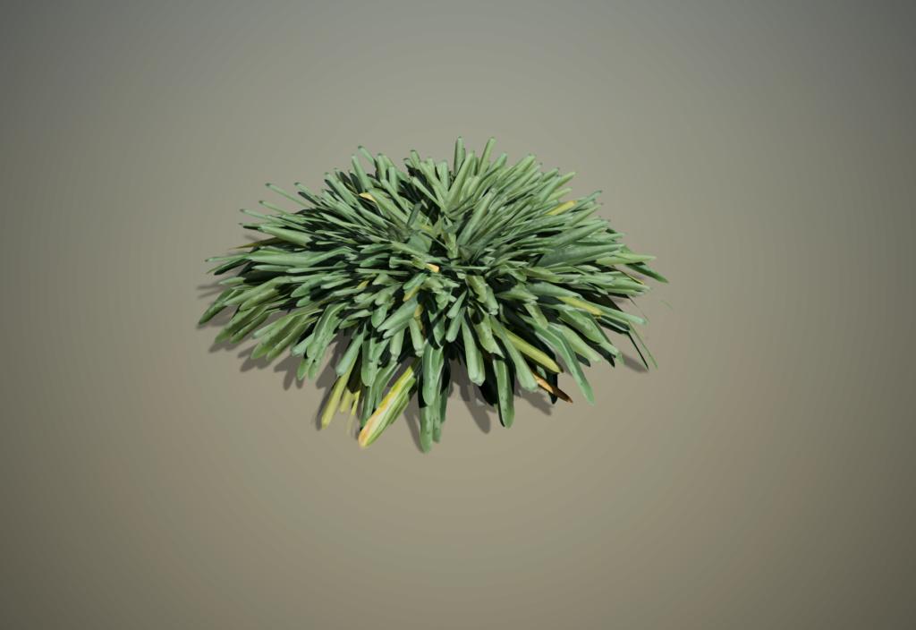 [ AUTRES LOGICIELS ]  SpeedTree  moteur de création d'arbres Agapan10
