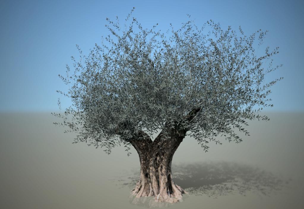 [ AUTRES LOGICIELS ]  SpeedTree  moteur de création d'arbres Olivie10