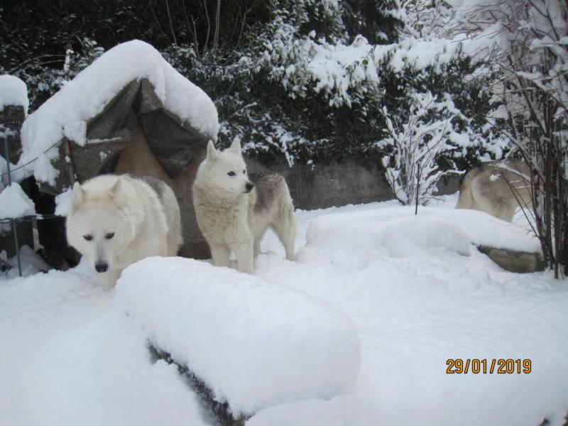 Saskia, Jiro, et leurs copains - Page 29 1024