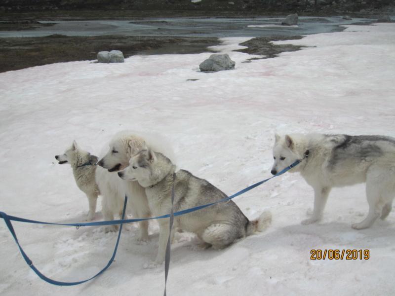 Saskia, Jiro, et leurs copains - Page 34 1042