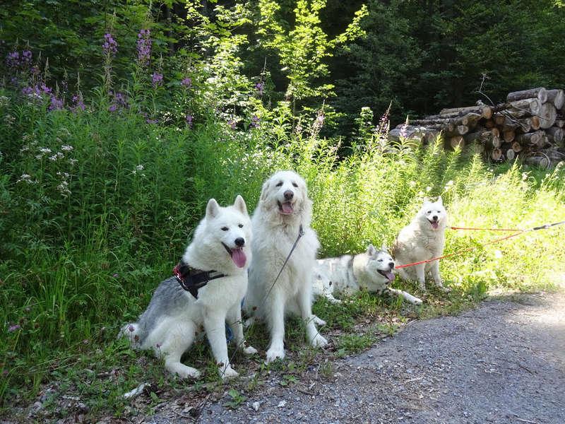 Saskia, Jiro, et leurs copains 110