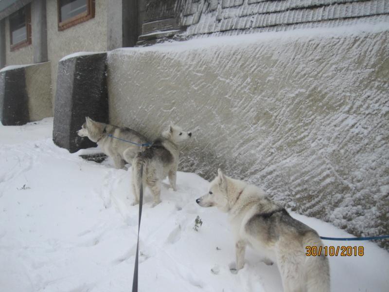 Saskia, Jiro, et leurs copains - Page 23 1113