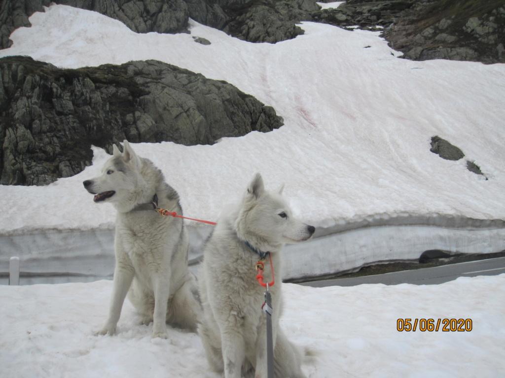 Saskia et Jiro retrouvent la Neige 1150