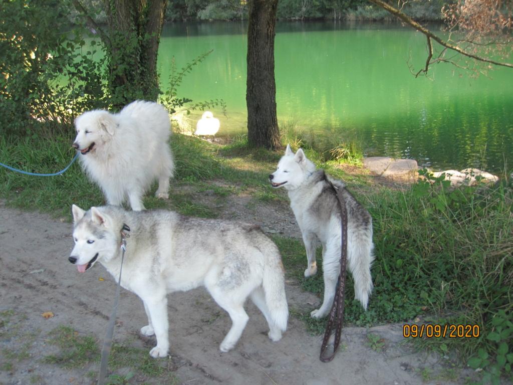 Saskia, Jiro, et leurs copains - Page 39 1156