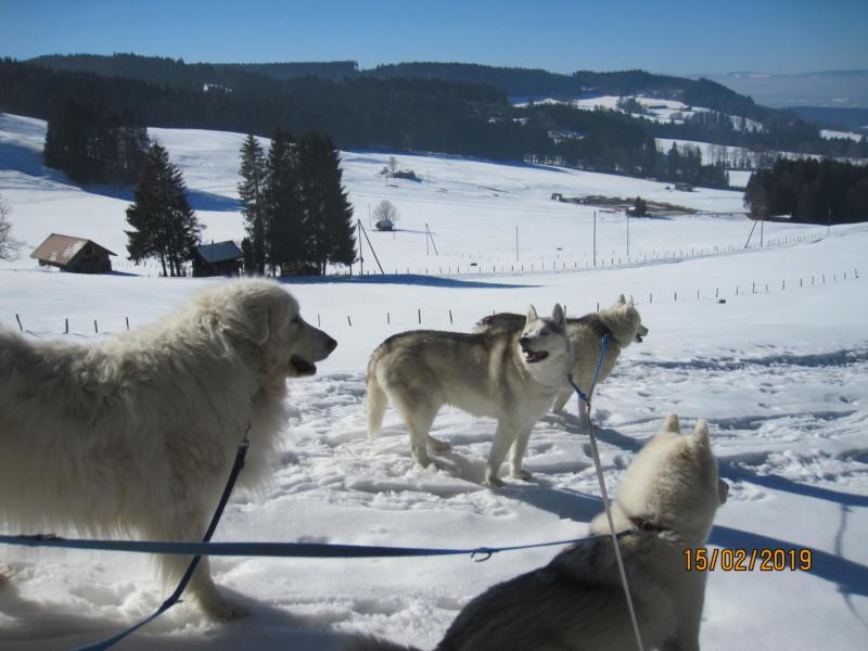 Saskia, Jiro, et leurs copains - Page 30 11_des10