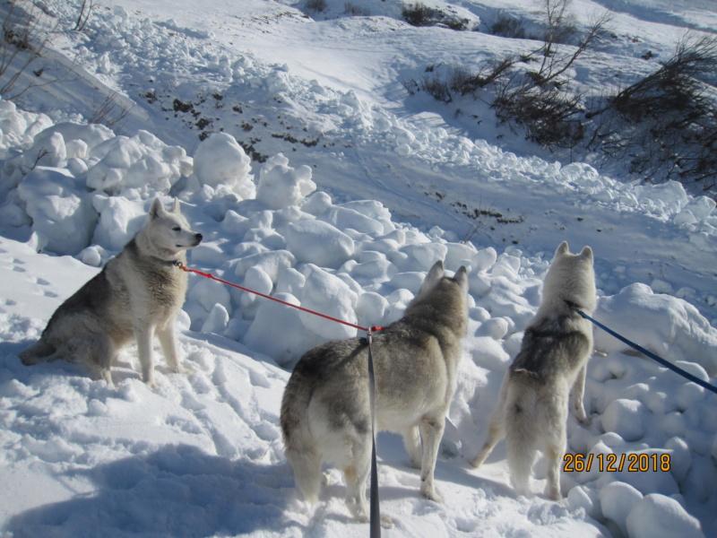 Saskia, Jiro, et leurs copains - Page 26 1215