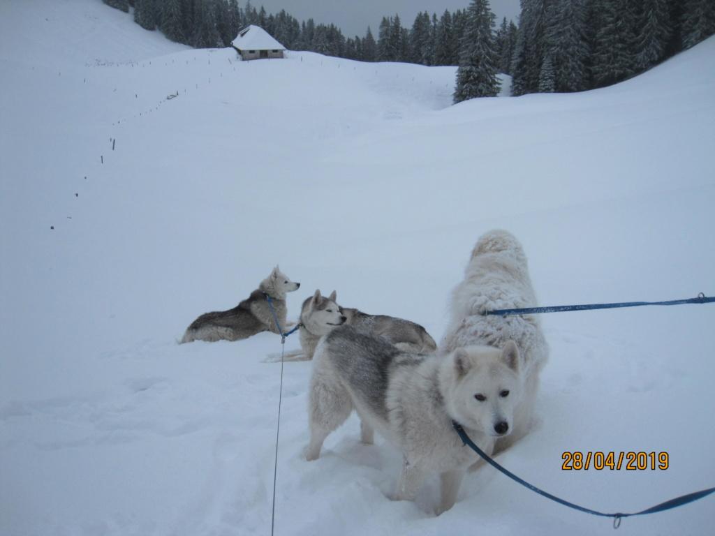 Saskia, Jiro, et leurs copains - Page 33 1232