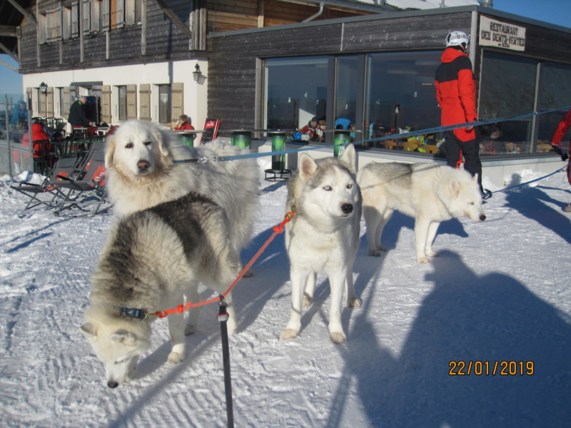 Saskia, Jiro, et leurs copains - Page 28 1416
