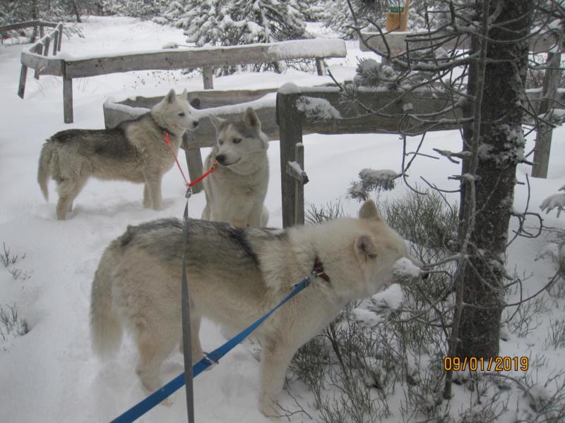 Saskia, Jiro, et leurs copains - Page 27 145