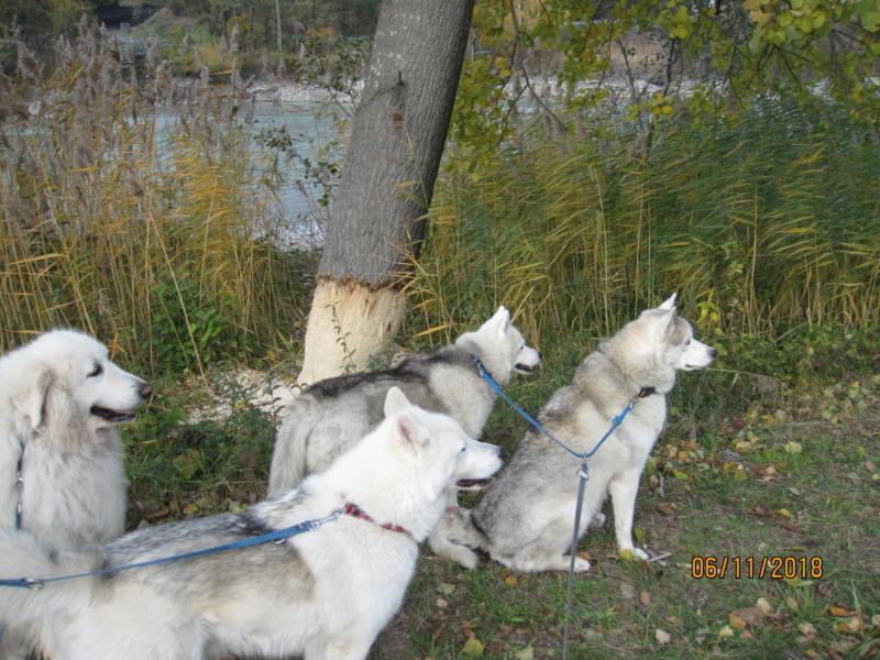 Saskia, Jiro, et leurs copains - Page 23 1611