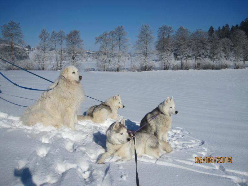 Saskia, Jiro, et leurs copains - Page 29 162