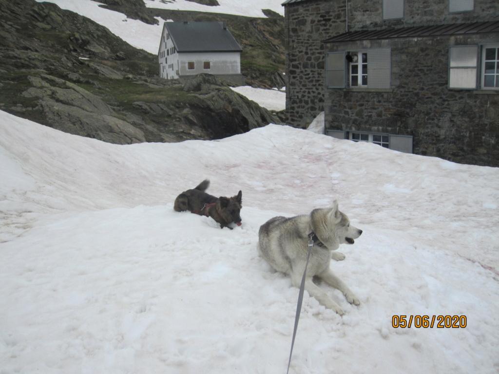 Saskia et Jiro retrouvent la Neige 1625