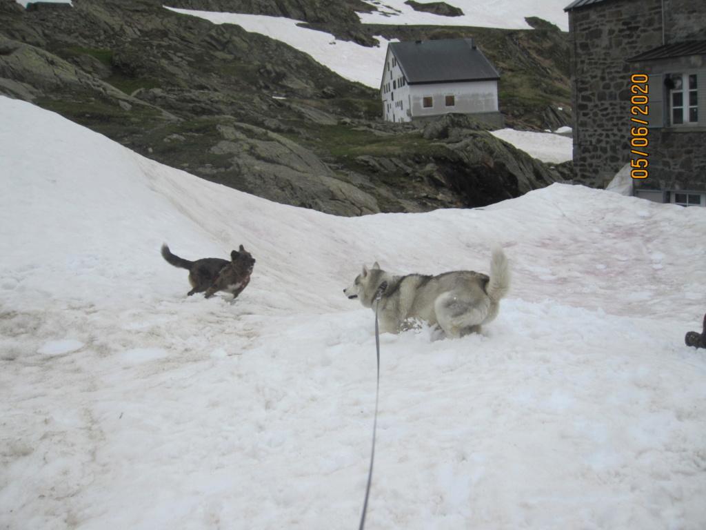 Saskia et Jiro retrouvent la Neige 1723