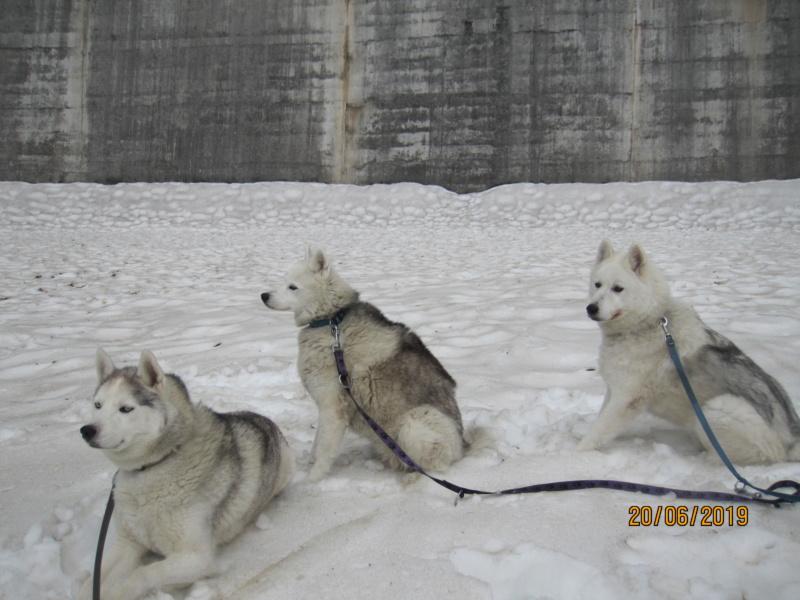 Saskia, Jiro, et leurs copains - Page 34 197