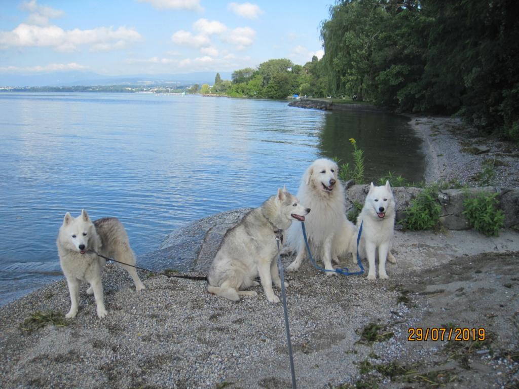 Saskia, Jiro, et leurs copains - Page 35 198