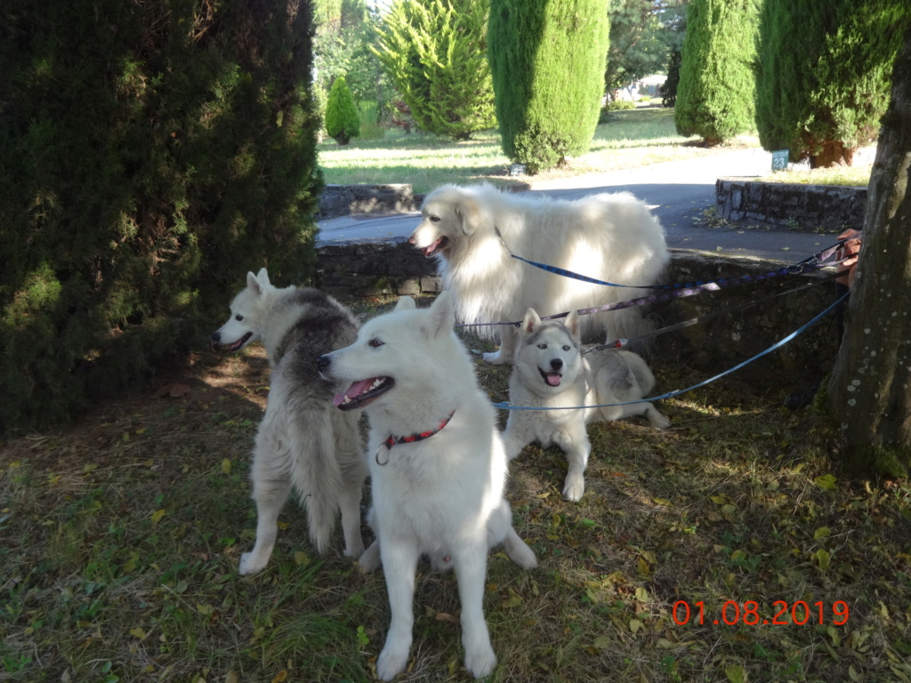 Saskia, Jiro, et leurs copains - Page 35 199