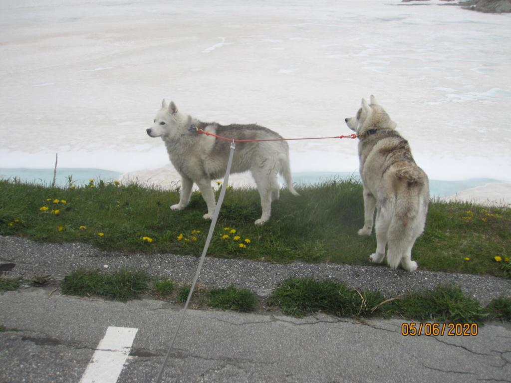 Saskia et Jiro retrouvent la Neige 2416